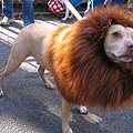 Halloween -cats and dogs (20).jpg