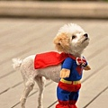Halloween -cats and dogs (23).jpg