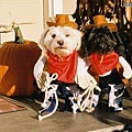 Halloween -cats and dogs (21).jpg