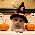 Halloween -cats and dogs (27).jpg