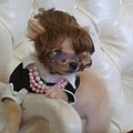 Halloween -cats and dogs (25).jpg