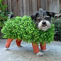 Halloween -cats and dogs (24).jpg