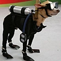Halloween -cats and dogs (26).jpg