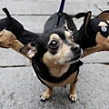 Halloween -cats and dogs (32).jpg