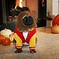 Halloween -cats and dogs (29).jpg