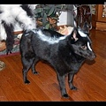 Halloween -cats and dogs (33).jpg