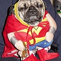 Halloween -cats and dogs (36).jpg