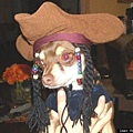 Halloween -cats and dogs (34).jpg