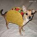 Halloween -cats and dogs (35).jpg