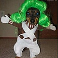 Halloween -cats and dogs (31).jpg