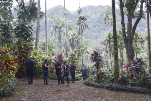 Hawaii Five-0  8x5 (1).png