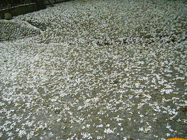 桐花地毯整個美