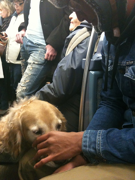 7~在巴黎都坐地鐵~今天巧遇導盲犬.JPG
