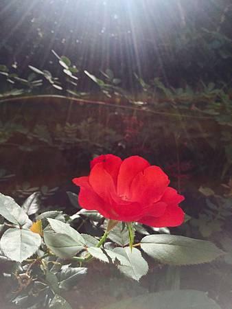 2.花之盛