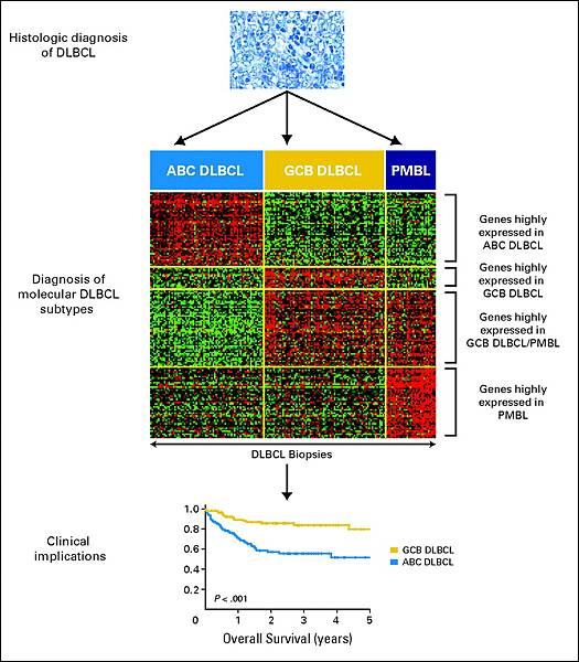 Gene expression profile