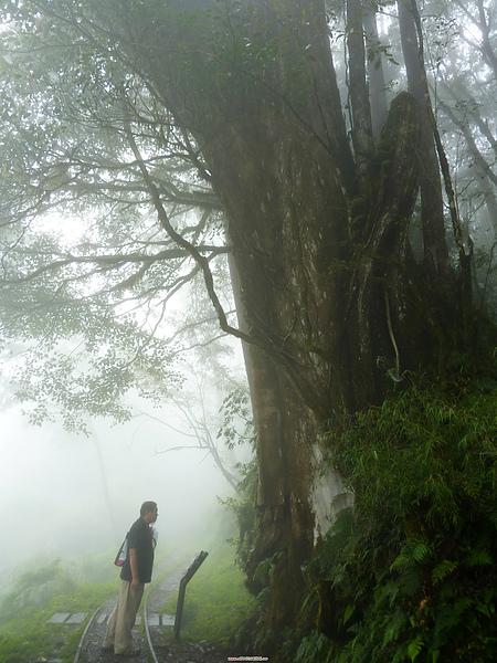 太平山 258.jpg