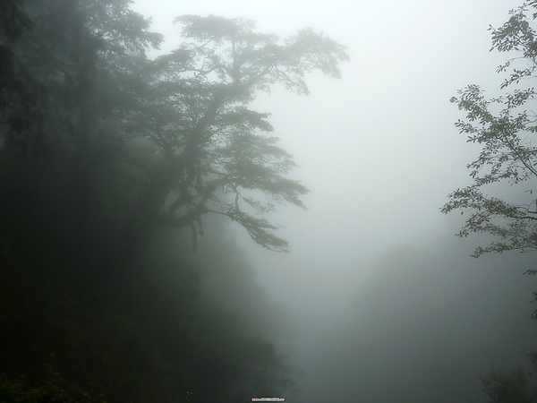 太平山 256.jpg