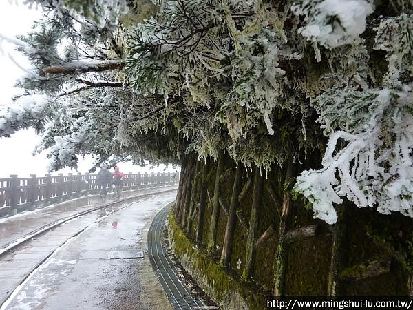 太平山~銀白世界 163.jpg