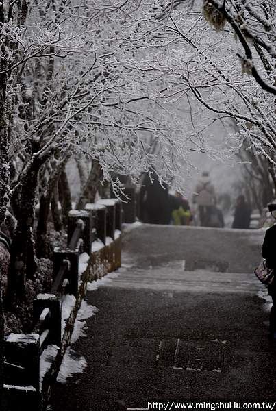 太平山~銀白世界 436.jpg