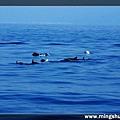 賞鯨 064.jpg