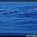 賞鯨 065.jpg