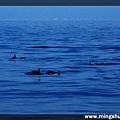 賞鯨 066.jpg