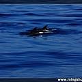 賞鯨 067.jpg