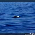 賞鯨 068.jpg