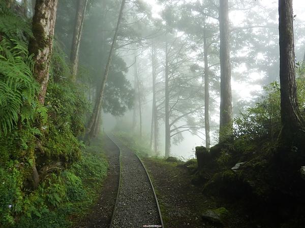 太平山 205.jpg