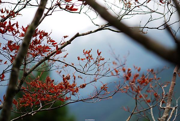 太平山 498.jpg