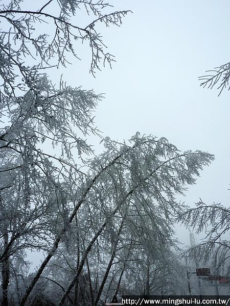 太平山~銀白世界 075.jpg