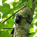 明水露樹的成長紀錄 061.jpg