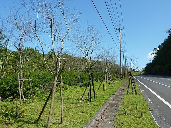 太平山 010.jpg