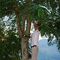 991112樹木修剪 022.jpg