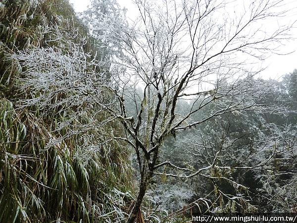太平山~銀白世界 035.jpg