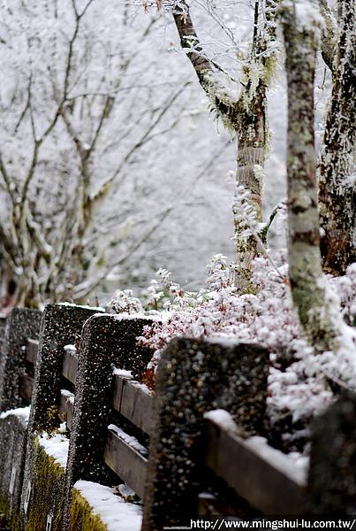 太平山~銀白世界 381.jpg