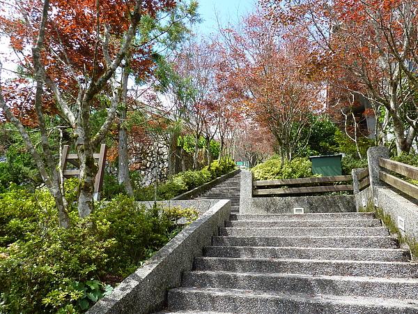 太平山 278.jpg