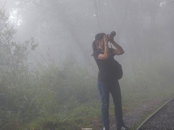 太平山 193.jpg