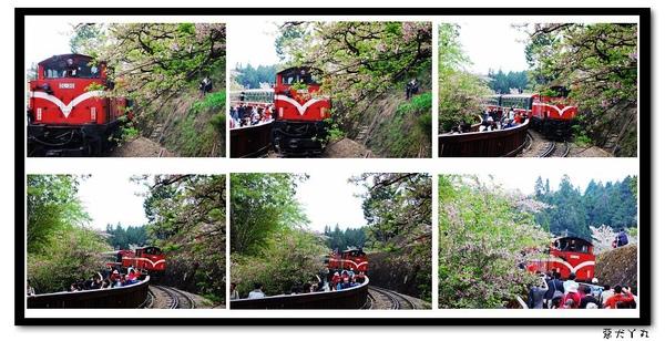 20090322丫里山賞櫻-9.jpg