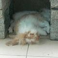 好熱,在石屋下,睡得真安穩