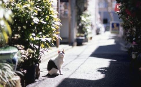 street cat.jpg