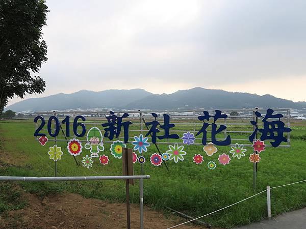 2016新社花海