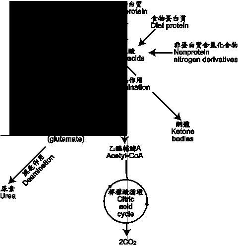 五大營養素與植化素7-4-p