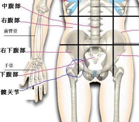 骨盆.png