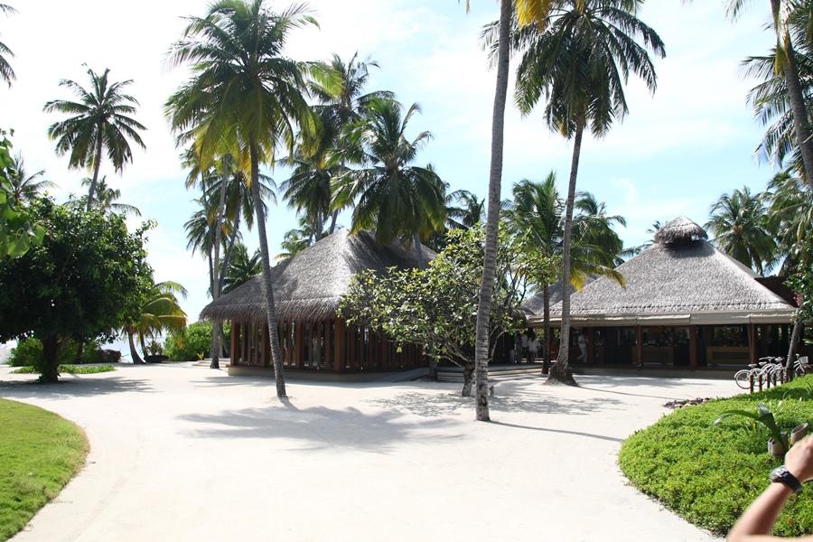 椰林樹影壓
