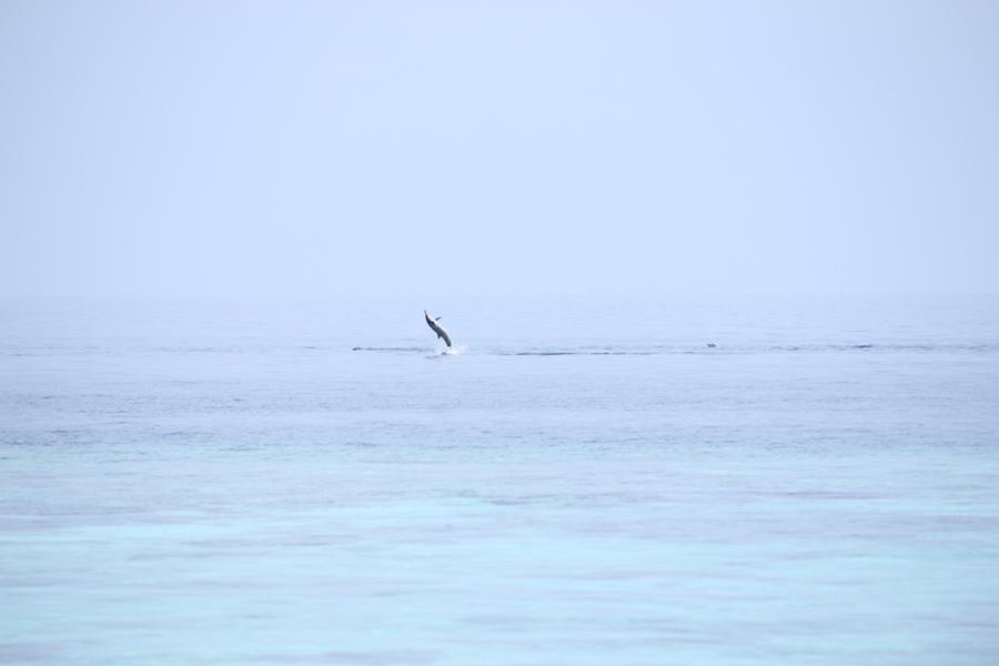 跳起來的海豚