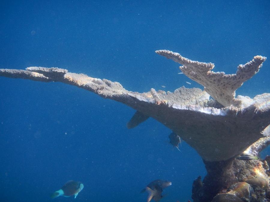 這是在海底拍的唷