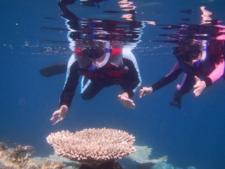 我們跟大珊瑚