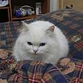 Bubu是隻愛睡覺的貓