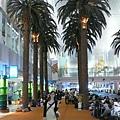 機場裡面有椰子樹